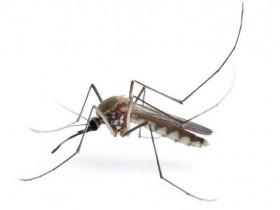 春眠不觉晓,处处蚊子咬,家里有宝宝,这可如何好?