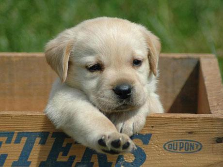 教你认狗狗,45种萌翻天小狗狗,太全了呀!