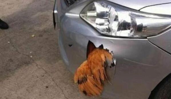 一只鸡撞到车,鸡没事,车坏了,这样的车你敢坐吗?