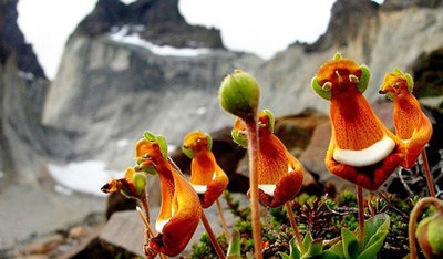 世界上长得奇葩的植物有哪些?