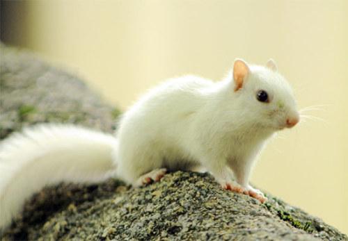 动物也会得白化病吗?