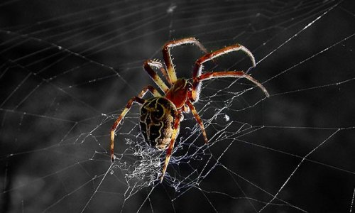 为什么蜘蛛不会被自己的网困住?