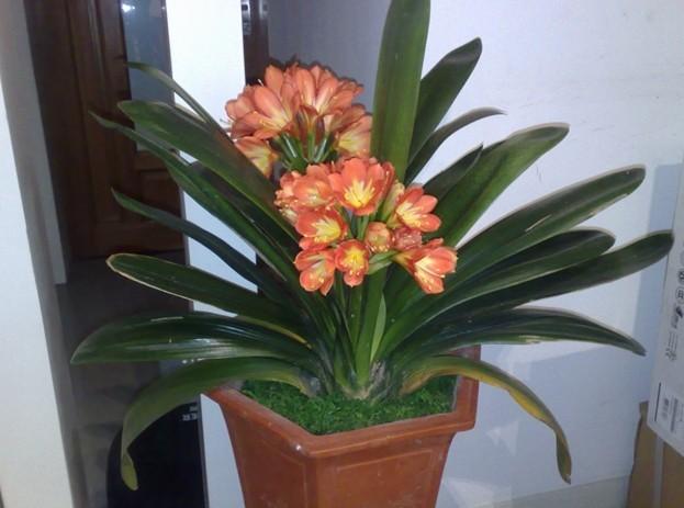 家里放什么花,才能让自己能加长寿?