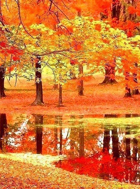 这多情的秋