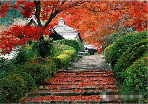 山西的红叶,太美了